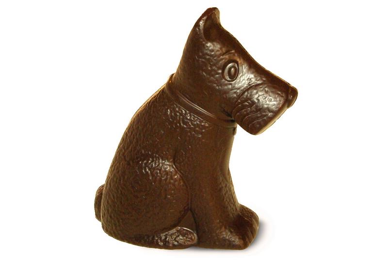 Šokoladinis šuo